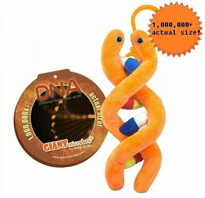 DNA (Deoxyribonucleic Acid) Keychain