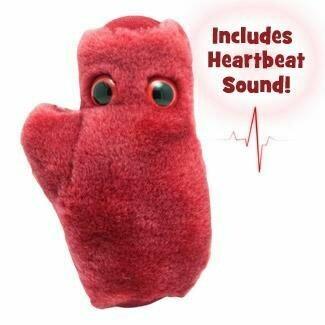 Heart Cell (Cardiomyocyte)