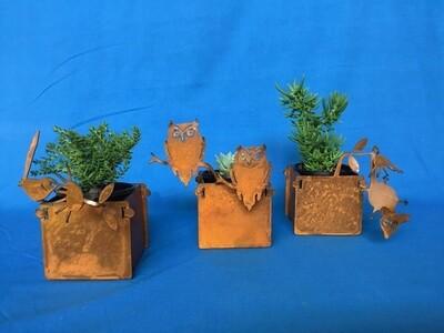 Planters Small