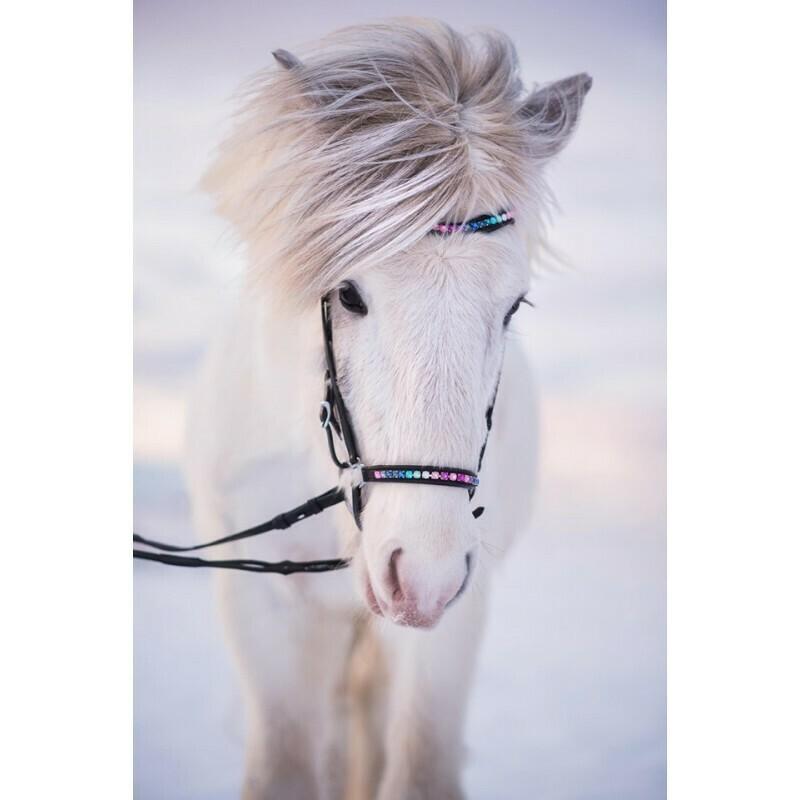 Nordic Horse RAINBOW Drop Noseband