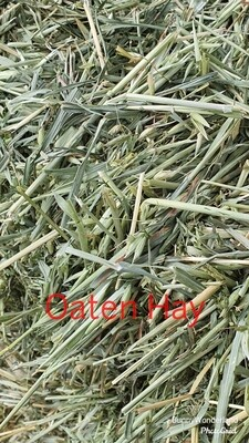 NEW SEASON Oaten Hay 1kg bag