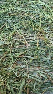 Meadow Rye Grass Hay 1 kg