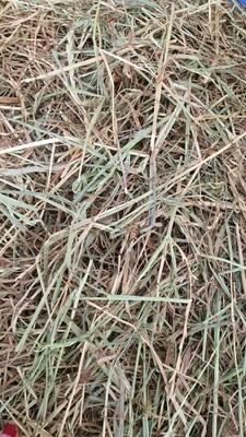 Meadow Rye Grass Hay 2.5kg