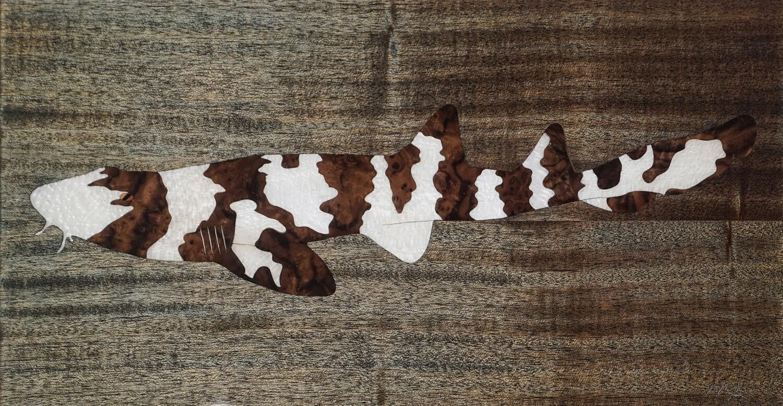 Brown Banded Bamboo Shark #2