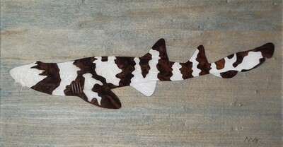 Brown Banded Bamboo Shark #3