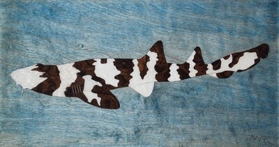 Brown Banded Bamboo Shark #9