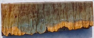 Live-edge lyptus' Burl Coast - Small  (15)