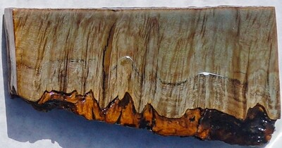 Live-edge lyptus' Burl Coast - Small  (16)