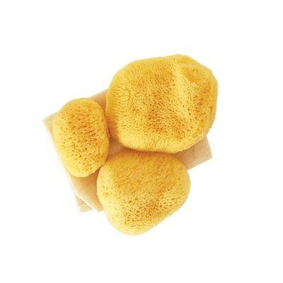 Premium 3 in 1 Sea Pearls Reusable Sea Sponges with Cotton Bag - Pack of 3 PREMIUM (Teeny, Regular, Large)
