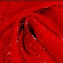 Red Crushed Iridescent Satin Linens