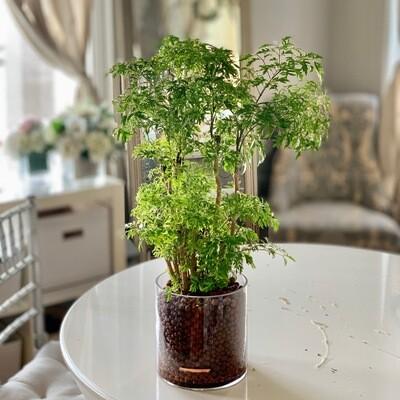 Wealth Plant