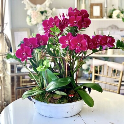 Monthly Exotic Live orchids Rental Service