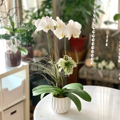 Premium Orchid & AirPlants