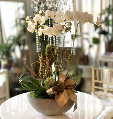 3 Premium Orchid & Succulent