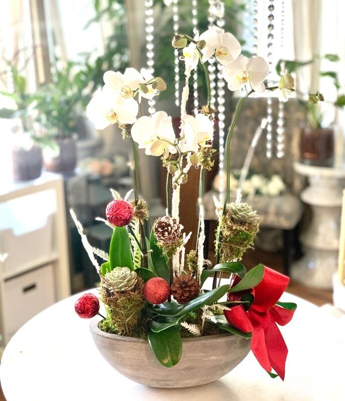 2 Premium Orchid & Succulent