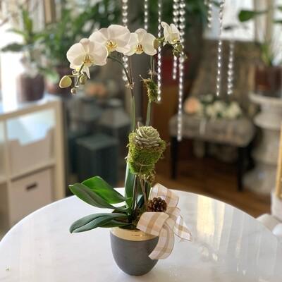 Premium Orchid & Succulent
