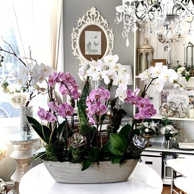 6-8 Orchids and Indoor Plant