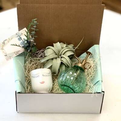 Happy thoughts air plants gift set