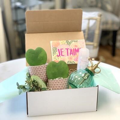 Sweetheart Hoya plants gift set