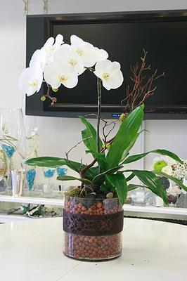 Single Orchid & Plant