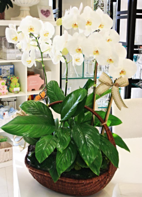 4 Orchids With Indoor Plant