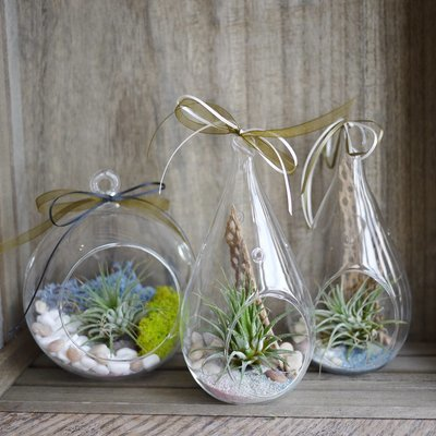 Mini air plant Set( 3 items)