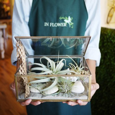 Glass Shadow box air plant