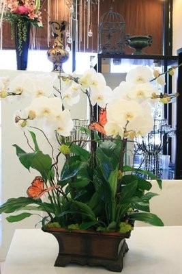 6 Orchids and Indoor Plant