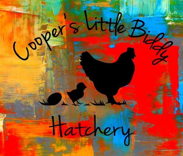 Cooper's Little Biddy Hatchery