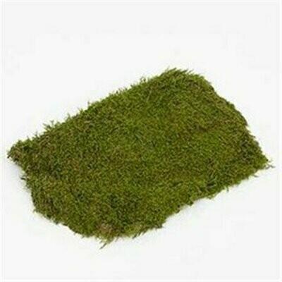 Dried Sheet Moss