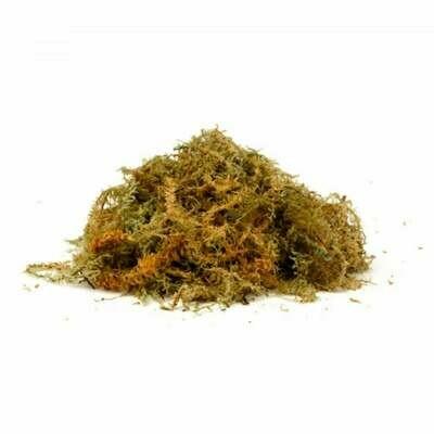 Long New Zealand Sphagnum Moss