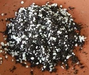 Bromeliad Soil