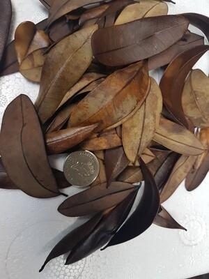 Marupa Leaves