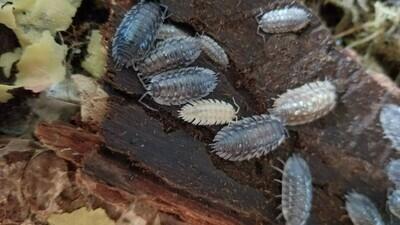 Skirted Isopods