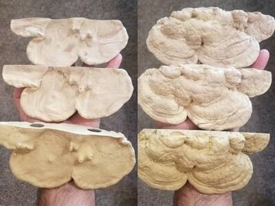 C3 Magnetic Mushroom ledge