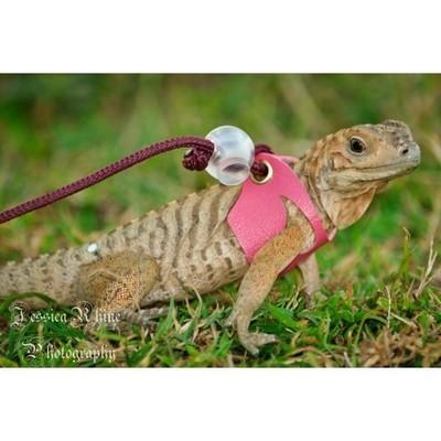 Lizard Harness with Leash