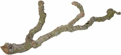 Cork Branches - Thick