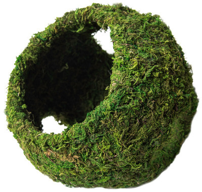 Mossy Cave with Holes 8''