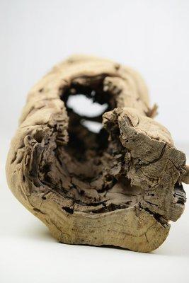 Hollow Grapewood Log