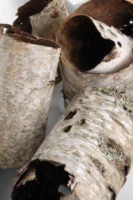 Birch Tube