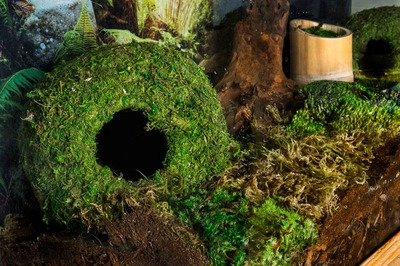 Mossy Cave 6'