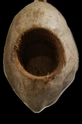 Coconut Hovel