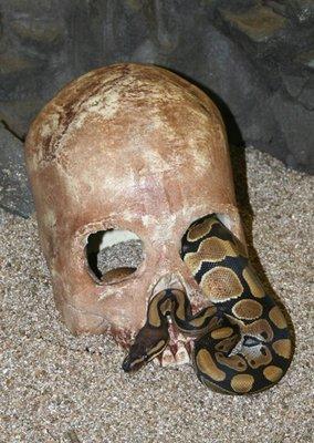 Reptile Hide- Skull Cave (3 colours)