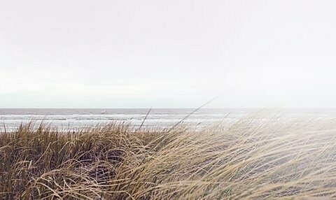 Beachwood Vetiver Fragrance Oil -