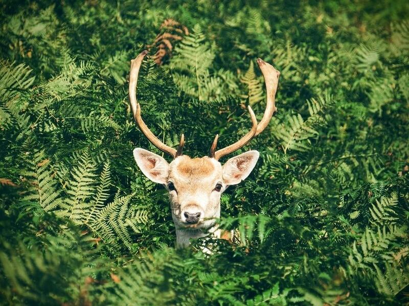 Reindeer's Breath SES Exclusive Fragrance Oil