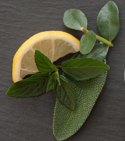 Eucalyptus and Spearmint Fragrance Oil