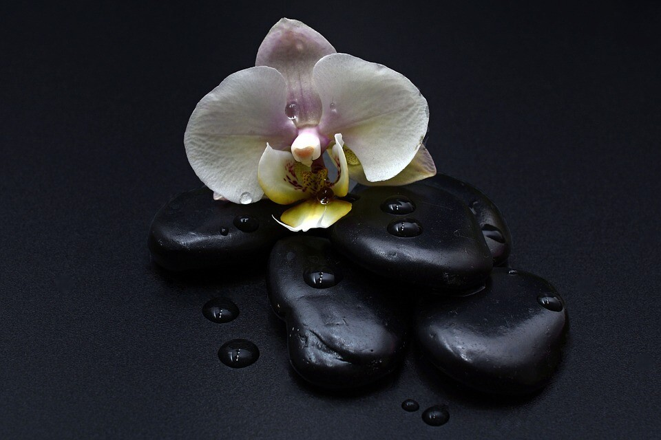 Midnight Orchid  Fragrance Oil