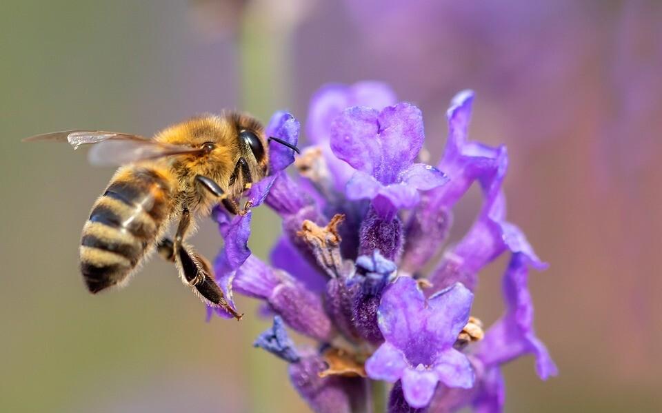 French Lavender & Honey BBW Dupe Fragrance