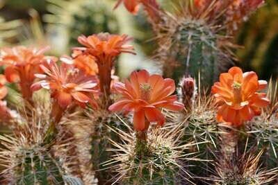 Baja Cactus Blossom BBW Type Fragrance