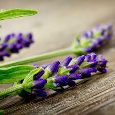 Lavender Sandalwood Fragrance Oil